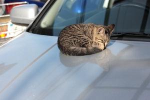 【ネタトピ】車になりきって語ろう!