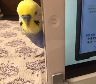 鳥カフェ・オープンpart2