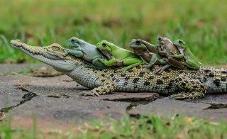 【苦手な人注意】プールで溺れる小動物たちを救え!カエルやトカゲの脱出用ボート(爬虫類出演中)