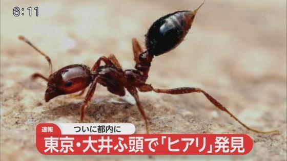 菅官房長官「ヒアリの繁殖、定着示す証拠ない」「直ちに日常生活に大きな影響を与えるとは考えにくい」