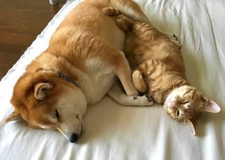 犬と猫をどっちも飼ってると寝る時こうなる…どっちも可愛すぎ!w
