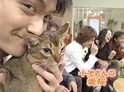 猫を愛でるイケメンが見たい