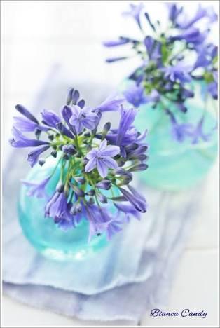 夏の花を貼るトピ