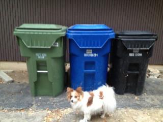 ゴミ捨て場の近くに住んでる方