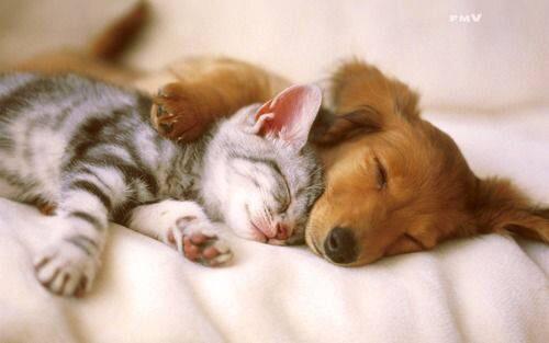 ペットと「添い寝」、人間と同程度の効果? 豪研究者ら、メリットが大きいと推測