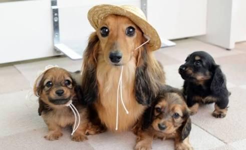 犬、ダックス好きな人~