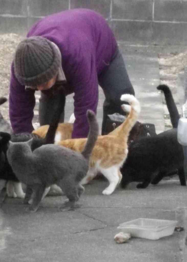 マダニ感染症の野良猫にかまれた50代女性が死亡 世界初