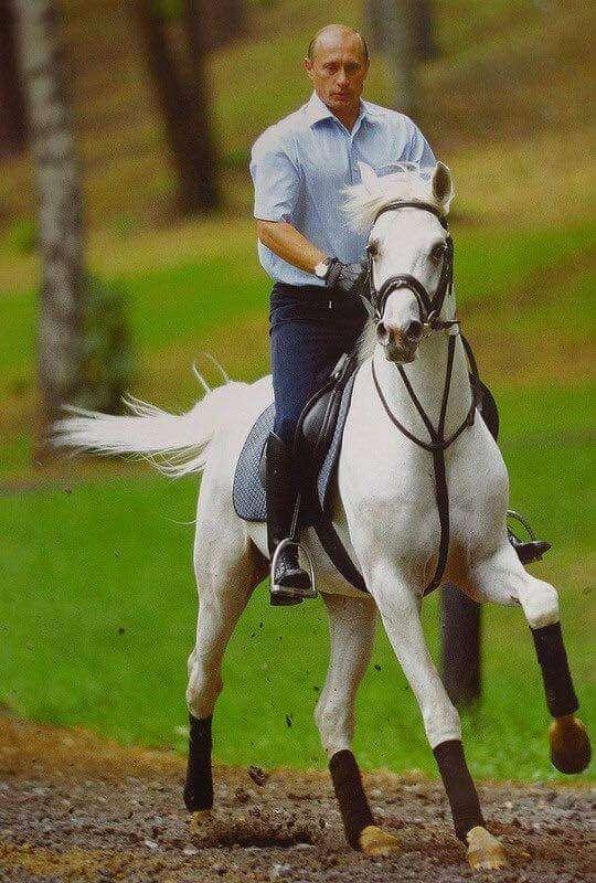 乗馬が好きな人〜