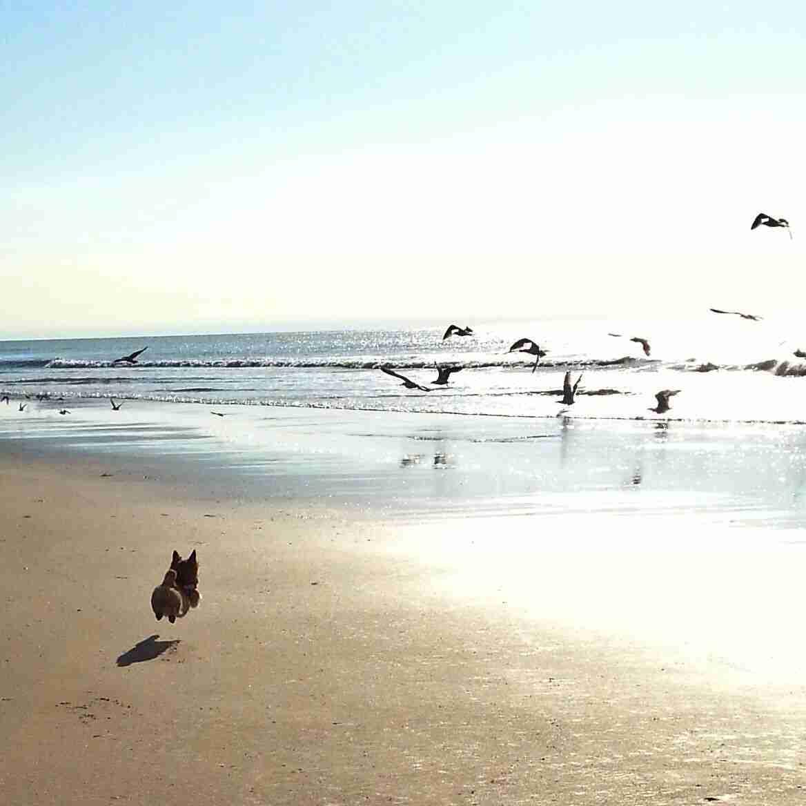 【画像】綺麗な海を眺めていたら、片平なぎささんが現れるトピ。時々船越さん、