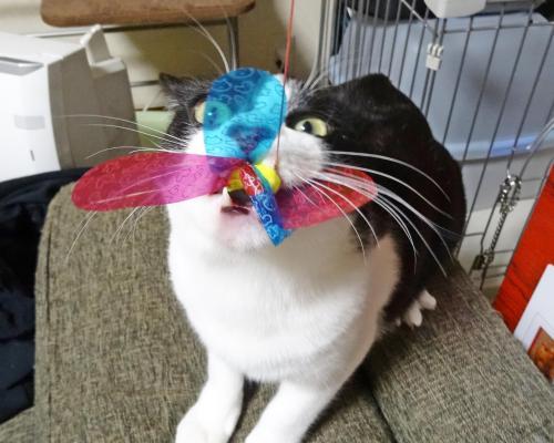 おすすめ猫用グッズ教えて!
