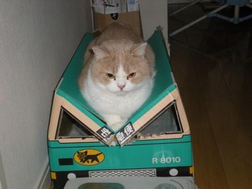 ガルちゃん猫カフェ17号店 開店しました♪ (初めての方も大歓迎!)