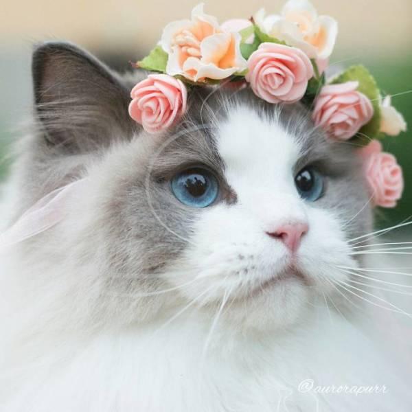 ω猫に関する雑談*