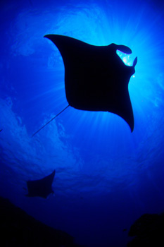 ・・海底散策・・・