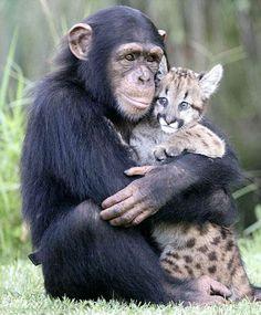 動物の世界にガルちゃんがあったら立ちそうなトピ