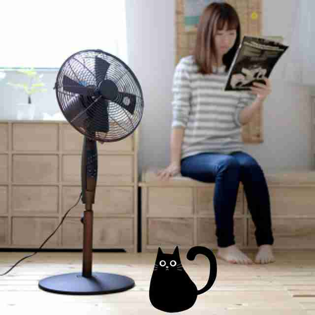 30日間・黒猫ちゃん日本一周!