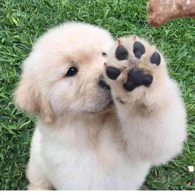 みんなの飼ってる犬種!