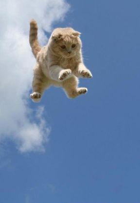 飛んでる画像を貼っていくトピ