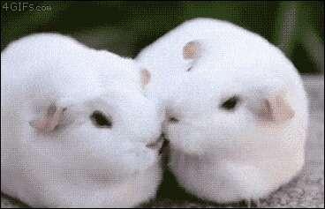 白色の動物画像が集まるトピ