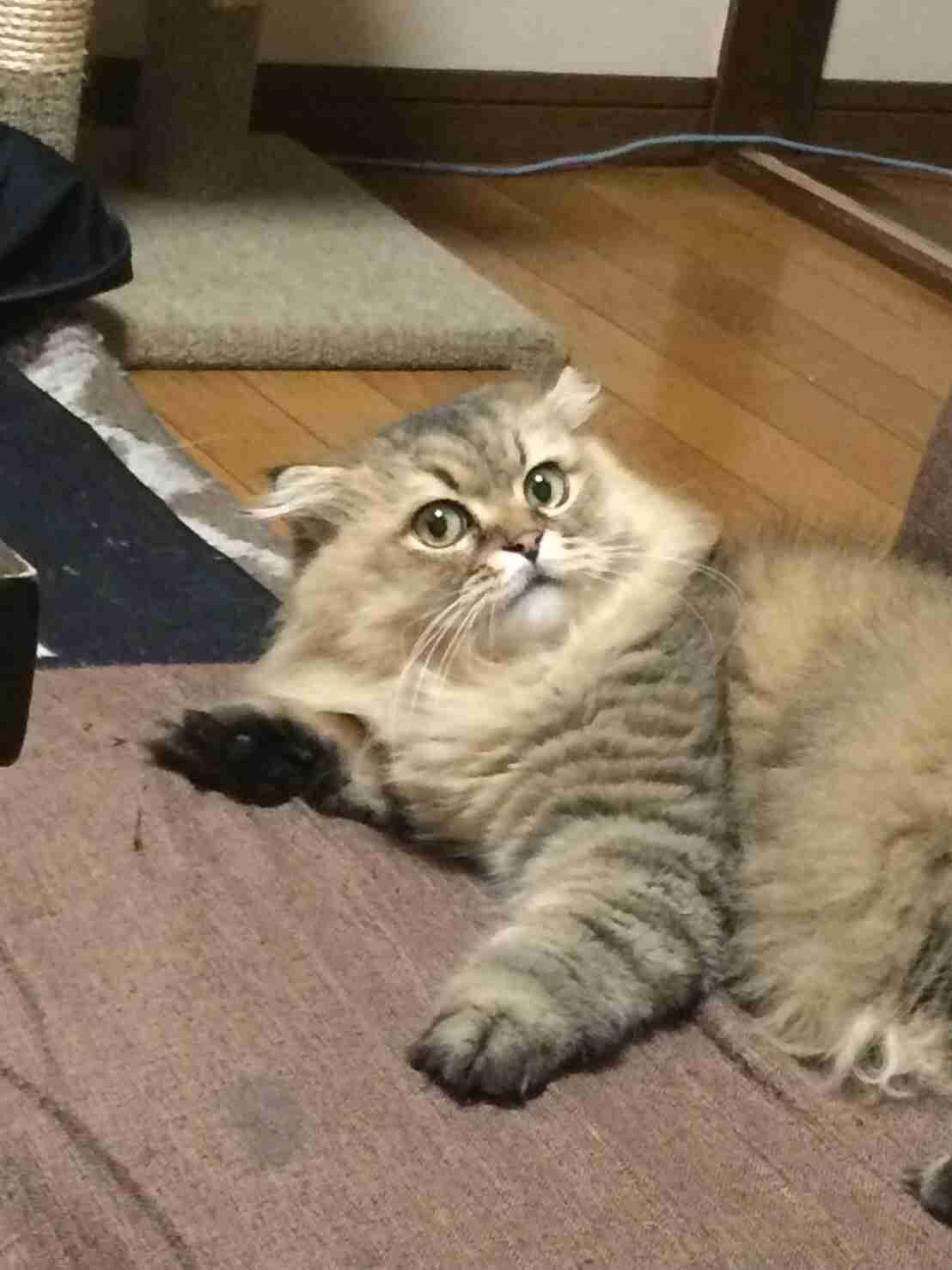 ペットの写真を貼っていくトピ②