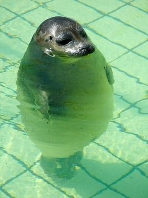 丸っこい・太った動物の画像を貼るトピ