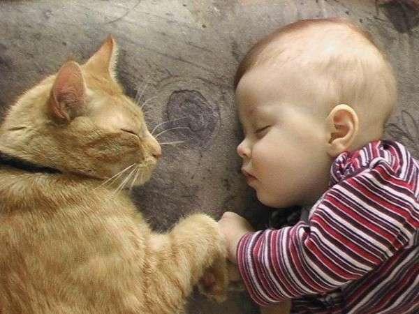 猫と赤ちゃんの生活