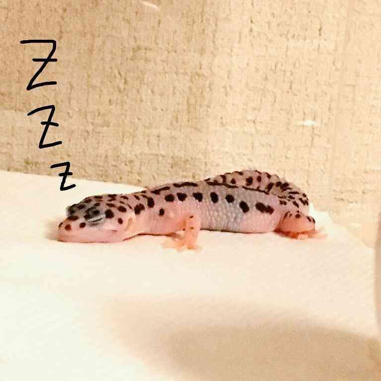 【苦手な人注意】爬虫類好き!話しませんか?