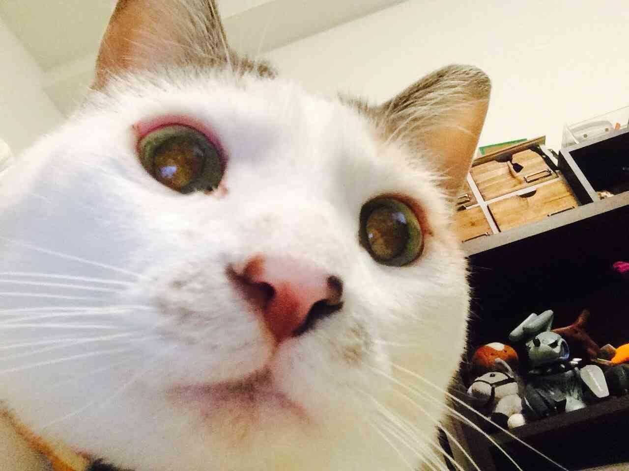 猫画像を貼りつくすトピ