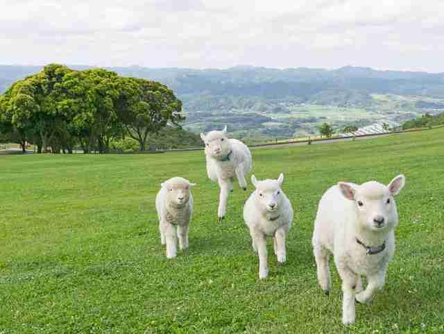 【ネタトピ】「日常にまぎれこむ牧野」を探してみませんか?