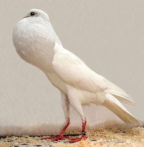 鳥界のイケメンを集めてアイドルグループを結成するトピ