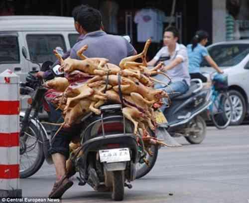 バリ島で人気の「サテ」は犬肉か、動物愛護団体が警告