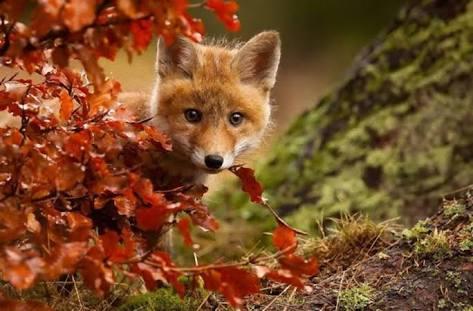 秋を待ち望むトピ