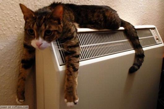暑くてキレてるような画像を貼るトピ