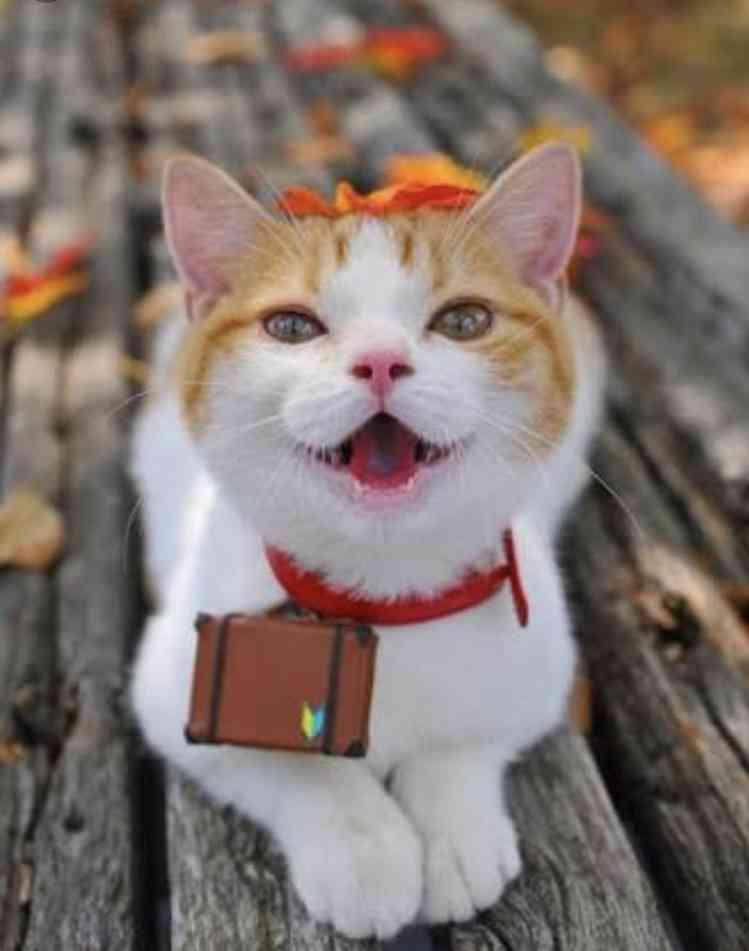 「ネコがあなたを殺そうとしている8つのサイン」! カーテンの後ろに潜んでいる時は殺害準備?