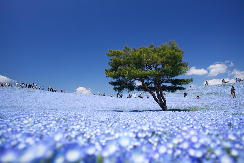 【日本だけど】海外に見える画像