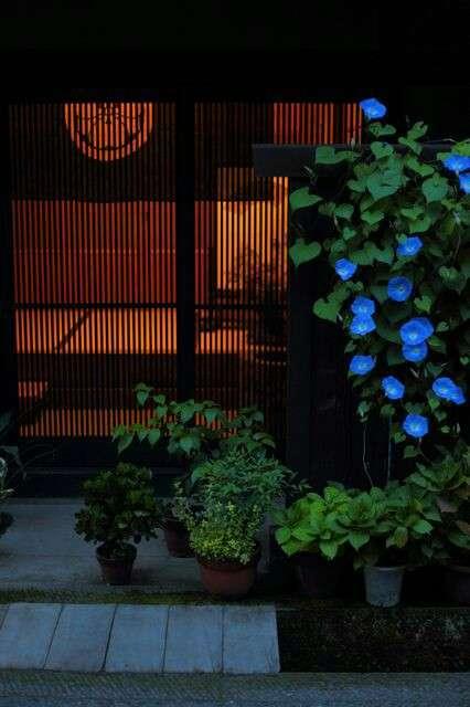 【画像】夏の、和風のものが見たい
