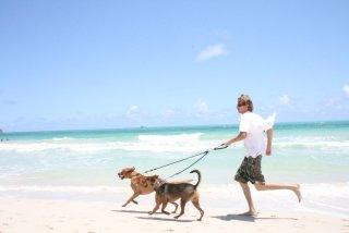 真夏の犬の散歩