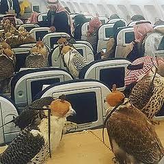 ユナイテッド航空、今度は仔犬を違う便で別空港へ 「本当にメチャクチャだな」呆れる声(米)