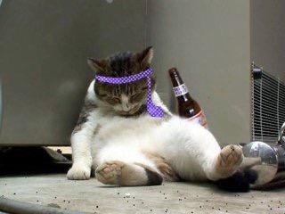 酔っぱらいおいでー♪