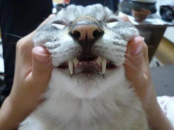 ブサかわな動物を貼っていくトピ