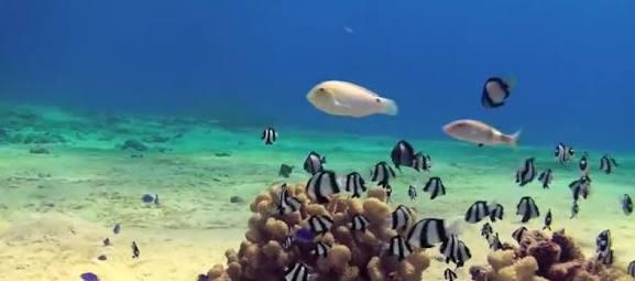 海の生きものの画像で癒されよう