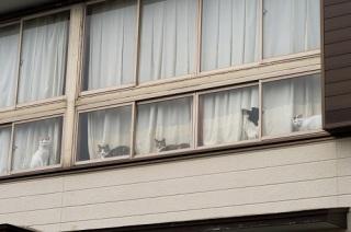 近所の監視が鬱陶しい!