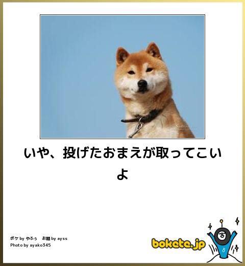 【動物限定】飼い主に不満がある動物、集まれ~!