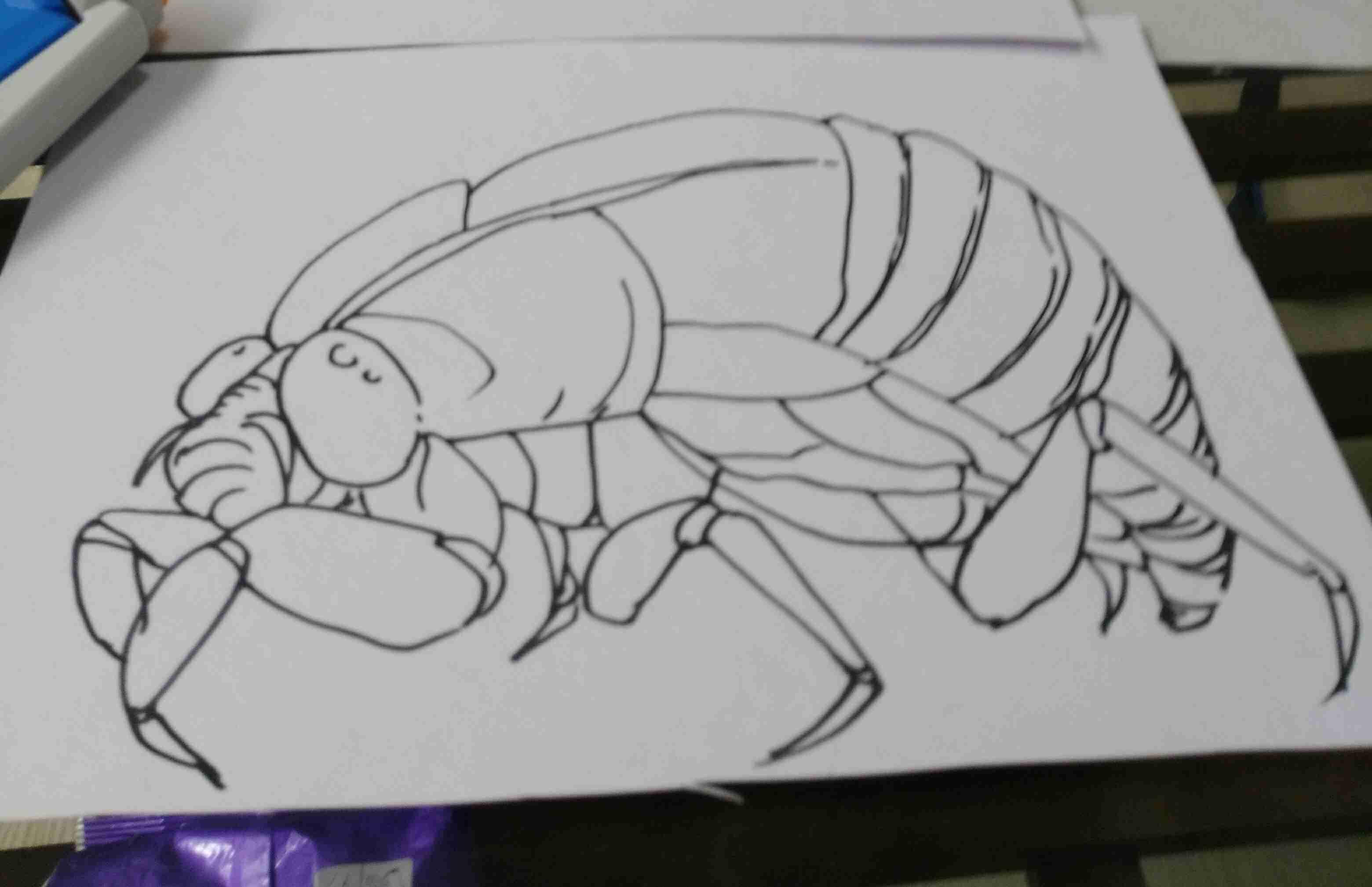 【お絵かきトピ】動物の絵を描こう!