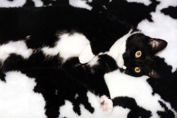 『猫のかくれんぼ写真』が激ムズと話題「マジで見つからない」「本当にいるの?」