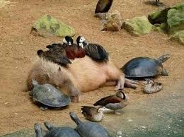 動物の笑える画像ください。