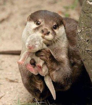 子育て頑張ってる動物の画像