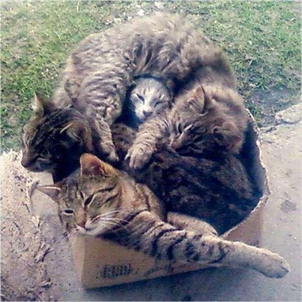 猫の七変化!