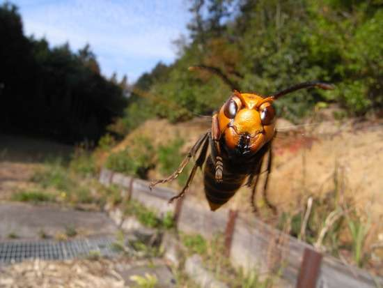 東京で幼稚園児ら23人がハチに手や足を刺される スズメバチの可能性