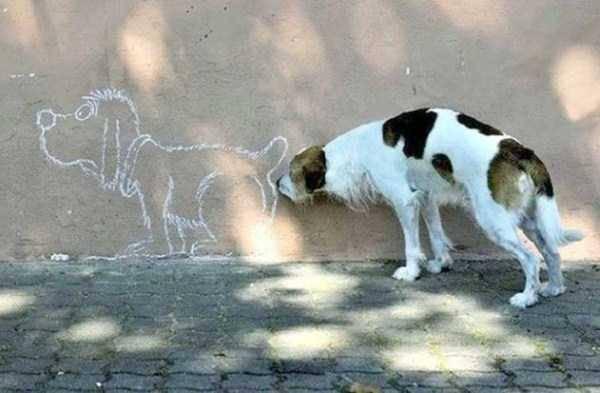 犬飼ってる人雑談しませんか?
