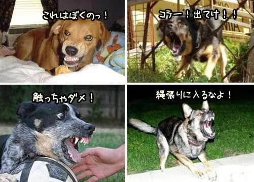 犬の被害にあってる人